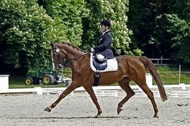 Disabile senza gambe in conpetizione (fonte: equitando.it)