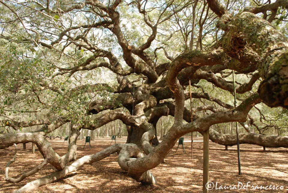 11Angel Oak