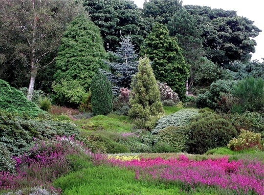 Heather_Garden,_Ness_Gardens_-_geograph.org.uk_-_329931
