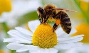 contatto ravvicinato con un'ape