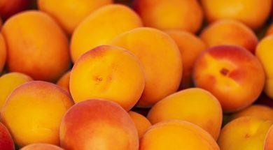 apricots-3433818_960_720