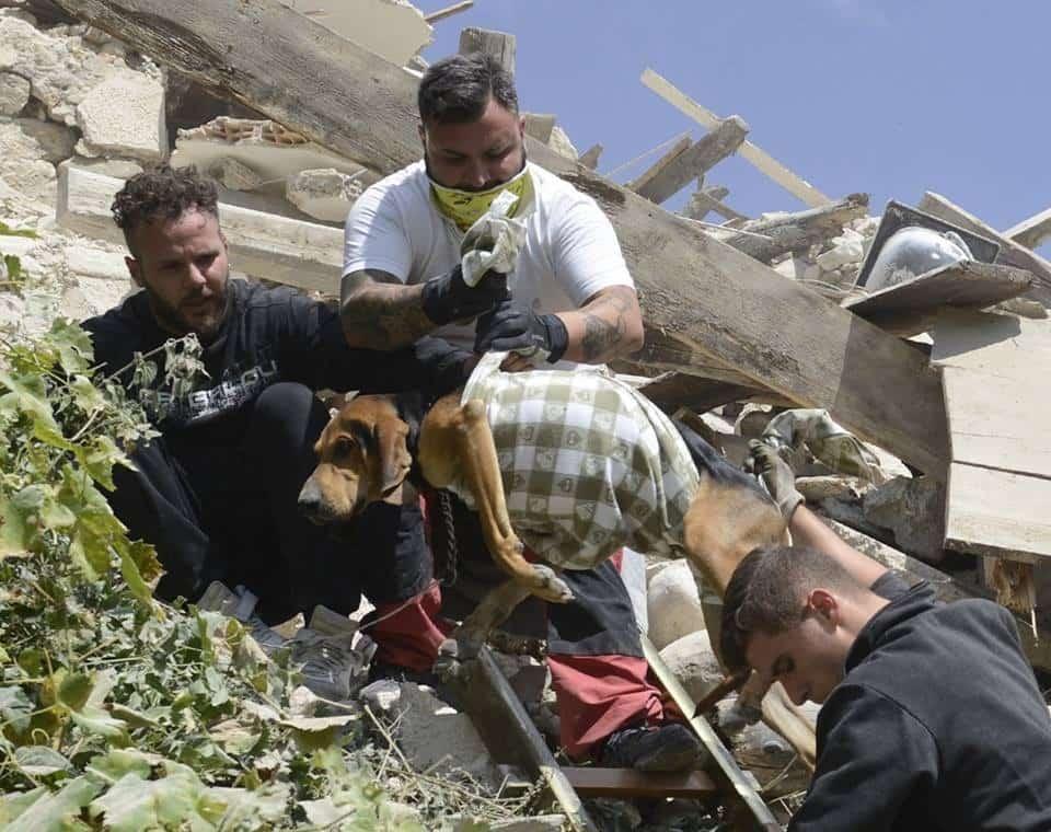 Il terremoto insegna che anche gli animali contano