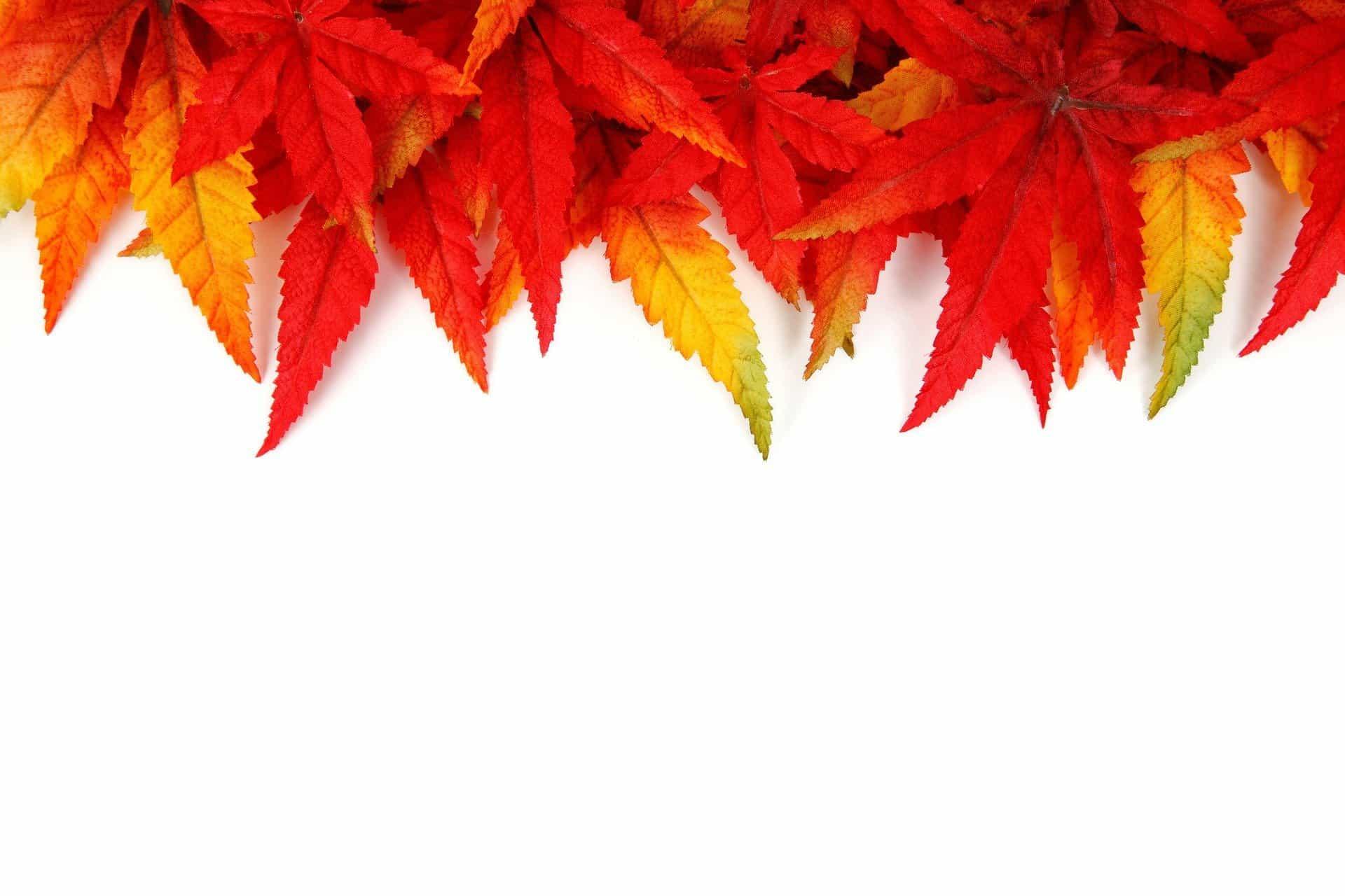 foglie_autunno_astratto