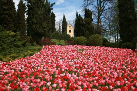 parco-sigurta-tulipani