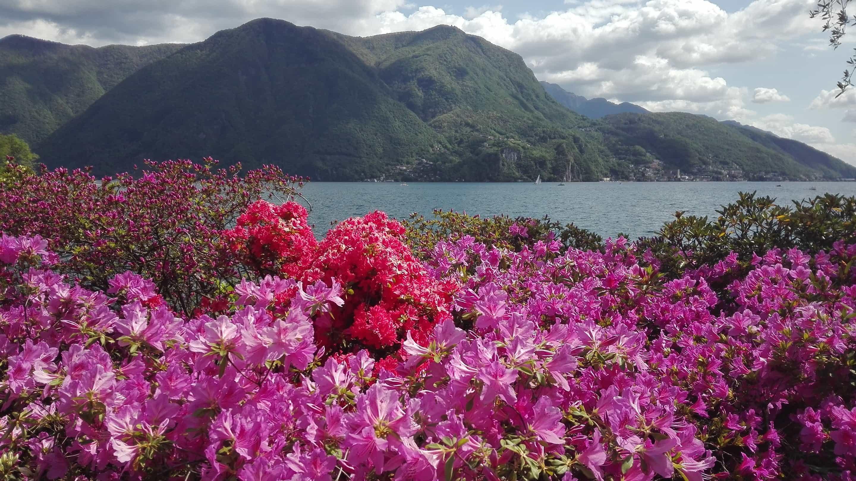 Un paradiso al confine: Lugano