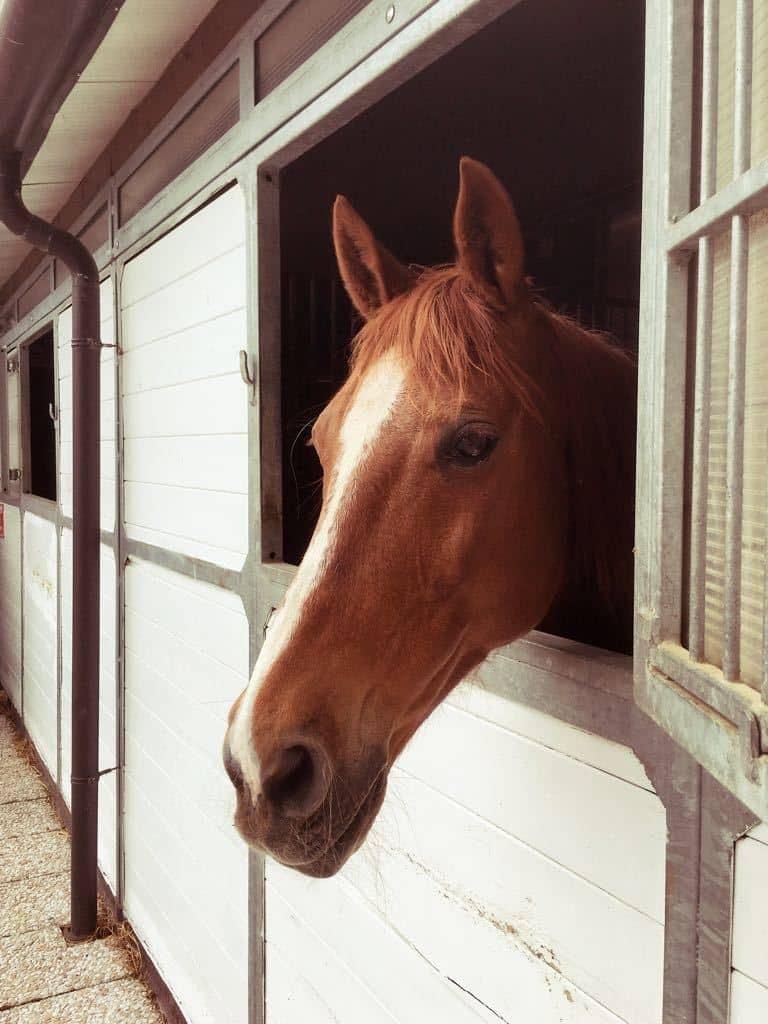 L'amore per i cavalli sin da bambini