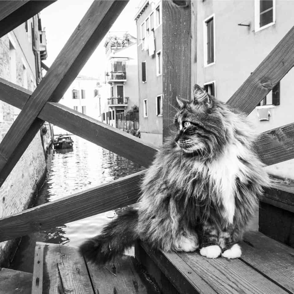 """I gatti di Venezia: """"Cats in Venice"""""""