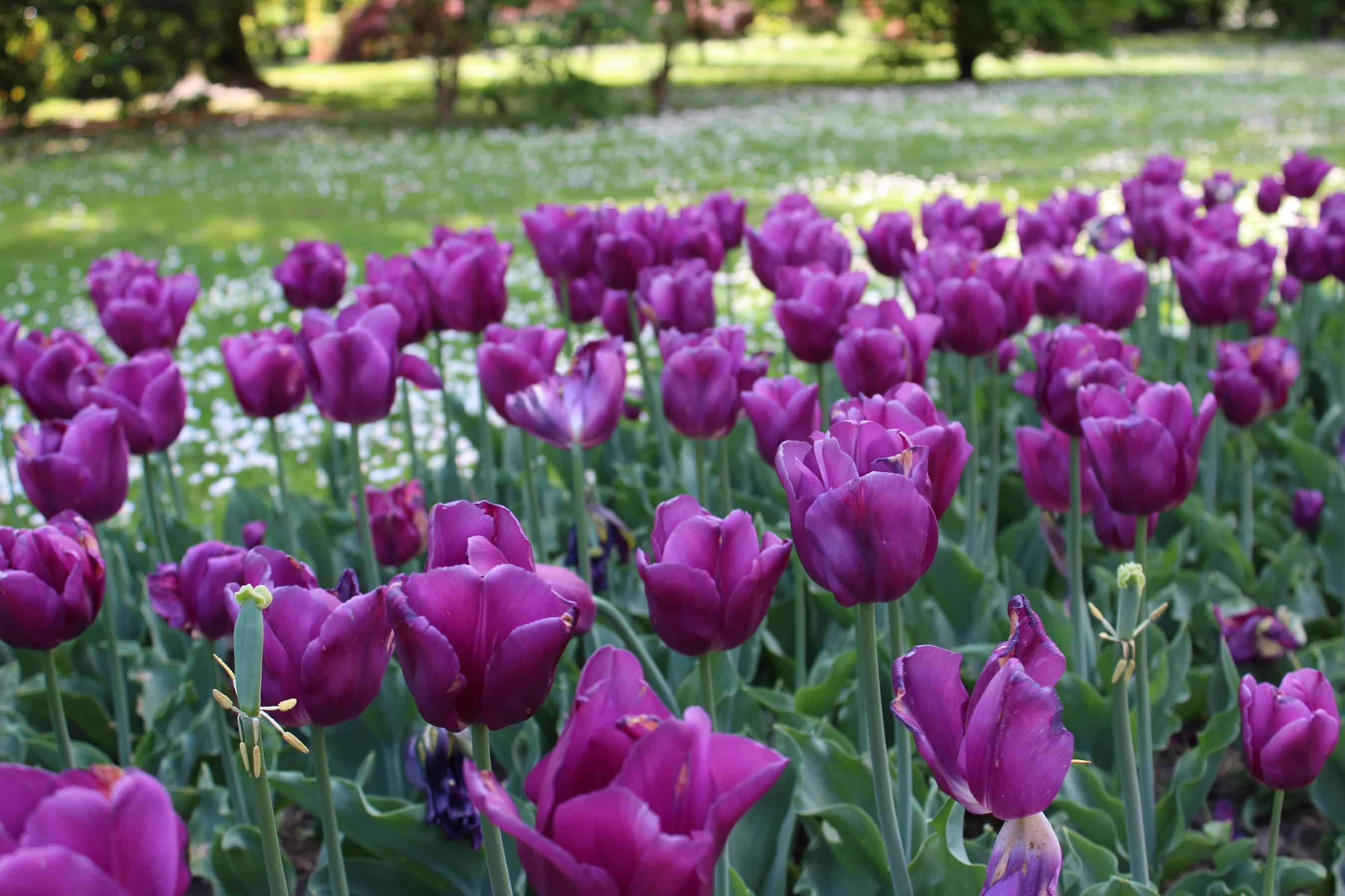 Villa Taranto, a Verbania il giardino dai mille colori