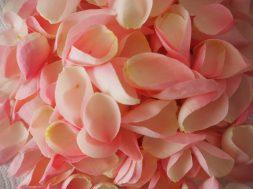Petali di Rose Unadonnaalcontrario