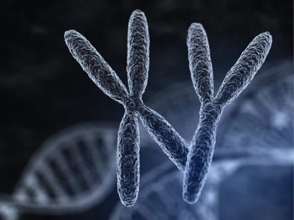 """Sindrome del cromosoma """"X-fragile"""""""