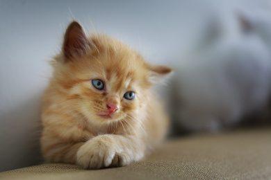 gatto-pix