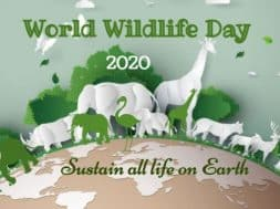 world-wildlife-day-feature-800×445