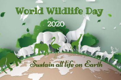 world-wildlife-day-feature-800×445
