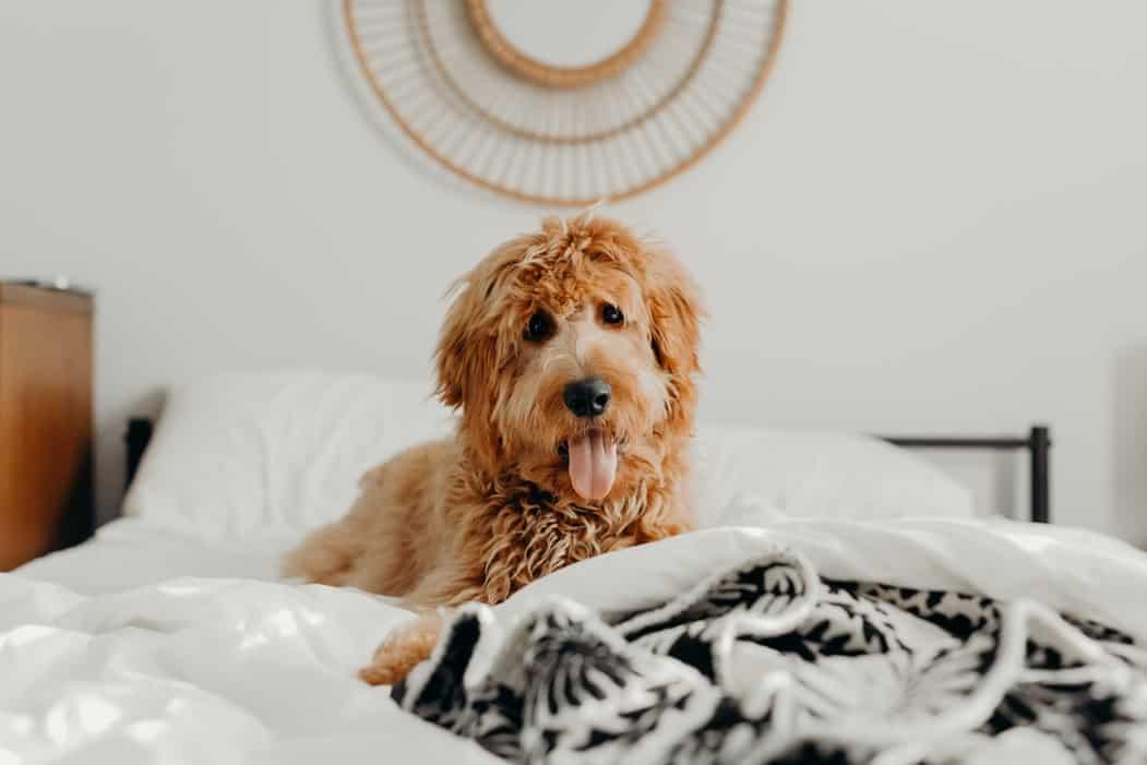 Dovresti dormire con il tuo cane di notte?