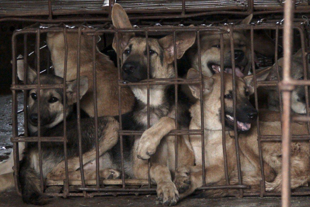 Festival della carne canina di Yulin
