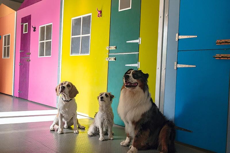 Harmonia: Hotel vacanze per cani