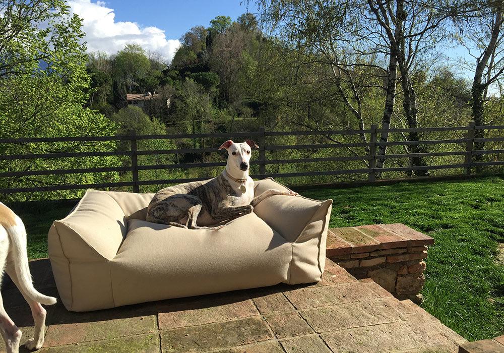 Asolo Dog Resort la pensione per cani da favola