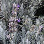 piante per terrazza