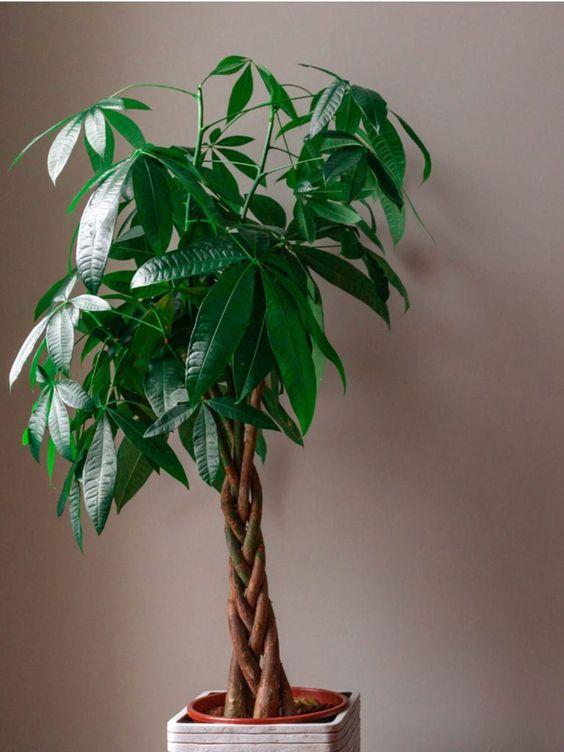 Le piante più instagrammate
