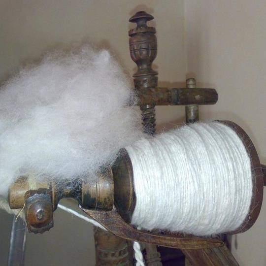 lana di cane