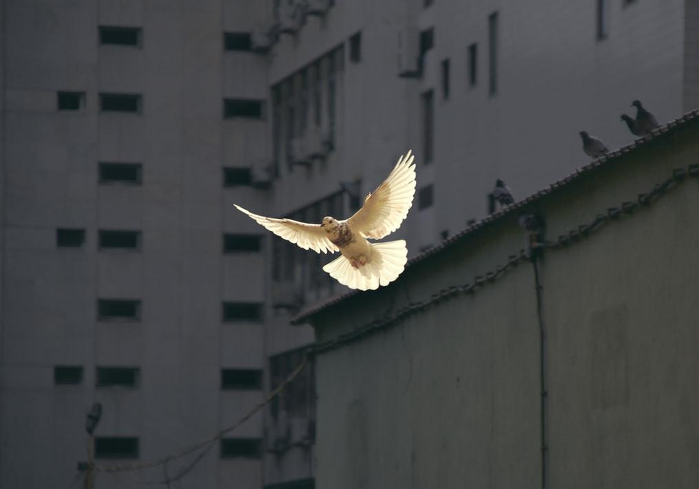Giornata Mondiale della Pace Interiore